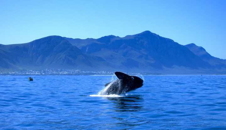 Hermanus Tour (FD) | Taga Safaris