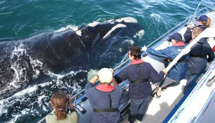Hermanus & Dyer Island Cruises (FD) | Taga Safaris - An African Safari with the Pioneers