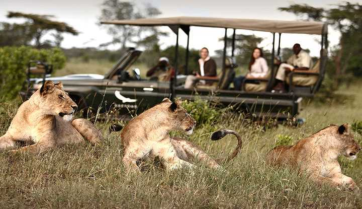 Migration, Lake and Crater Safari | African Safaris with Taga