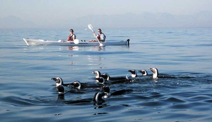Peninsular Sea Kayaking
