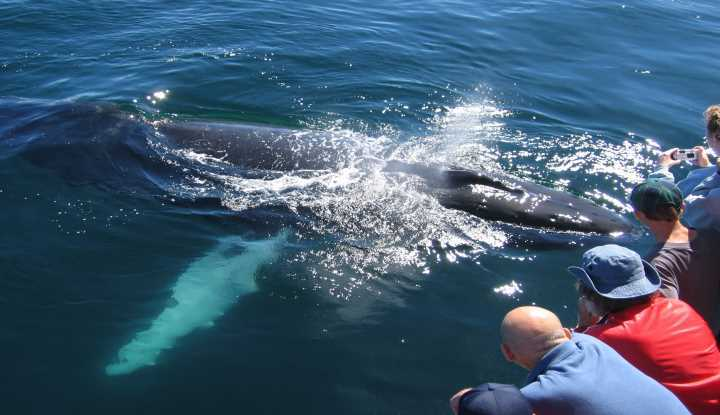 Cape Peninsula & Whale Watching (FD) | African Safaris with Taga