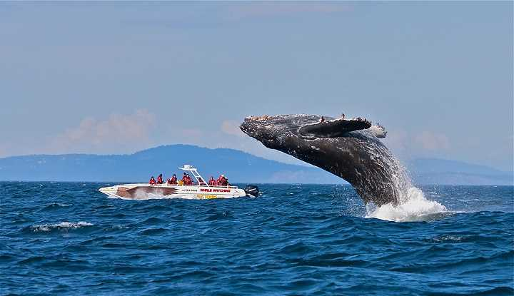 Peninsular Whale Watching