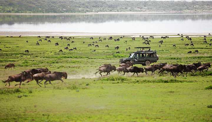 Tanzania Explorer Safari | African Safaris with Taga