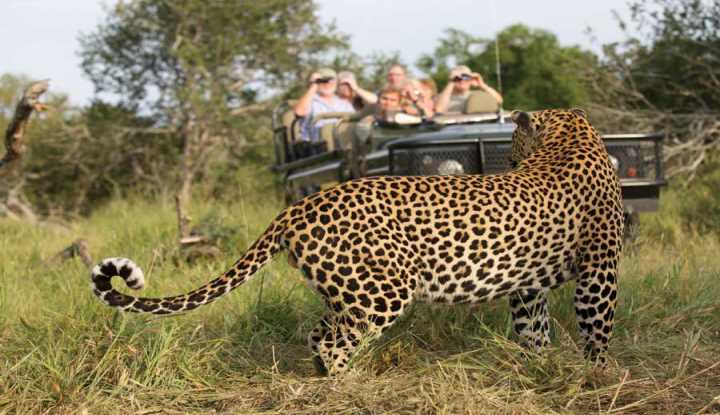 Ultimate Leopard Safari