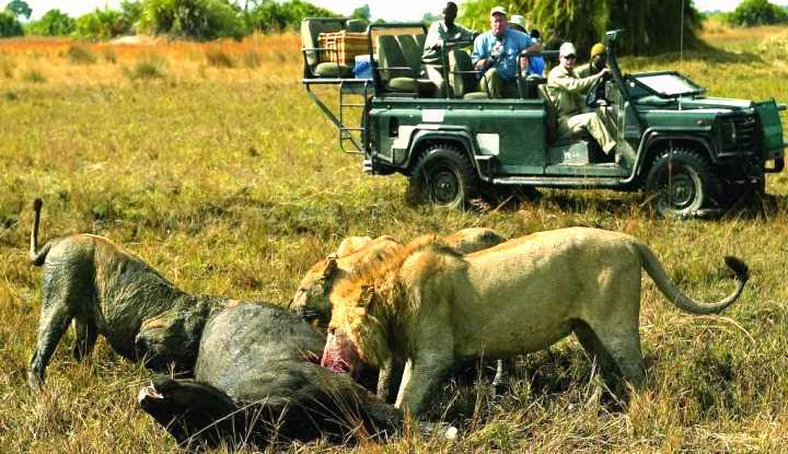 Ultimate Predator Safari | Taga Safaris