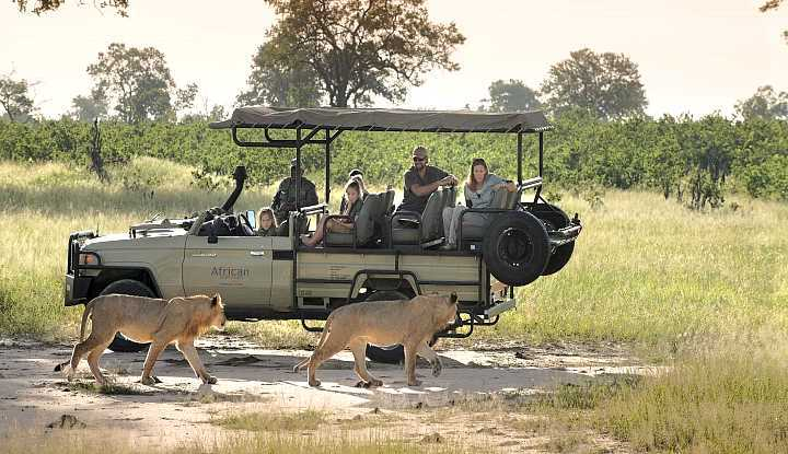 Ultimate Zimbabwe Safari