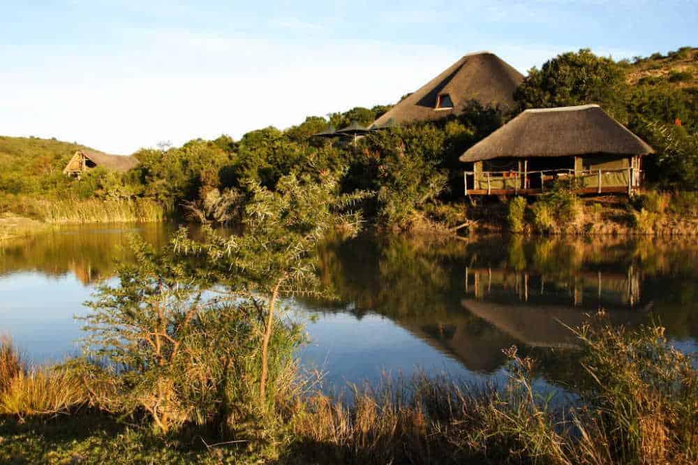 Shamwari Game Reserve | Taga Safaris