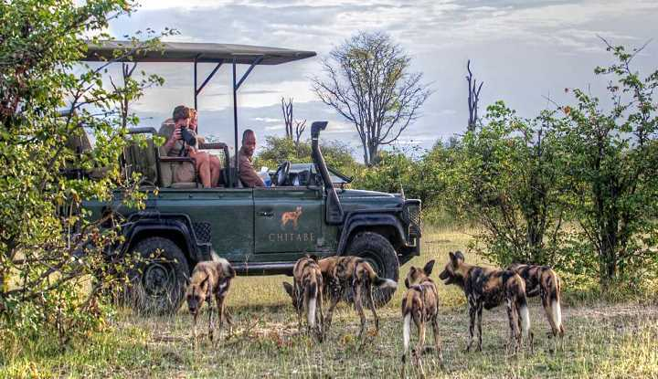 Tailormade Safaris Botswana | African Safaris with Taga
