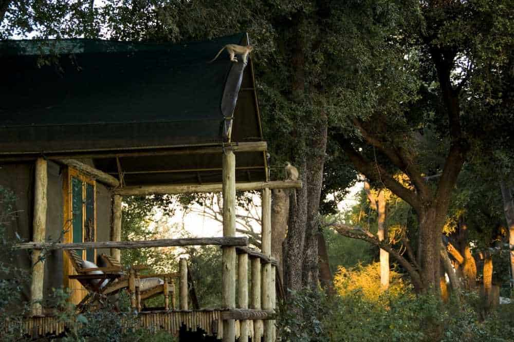 Duba Plains Camp | Taga Safaris