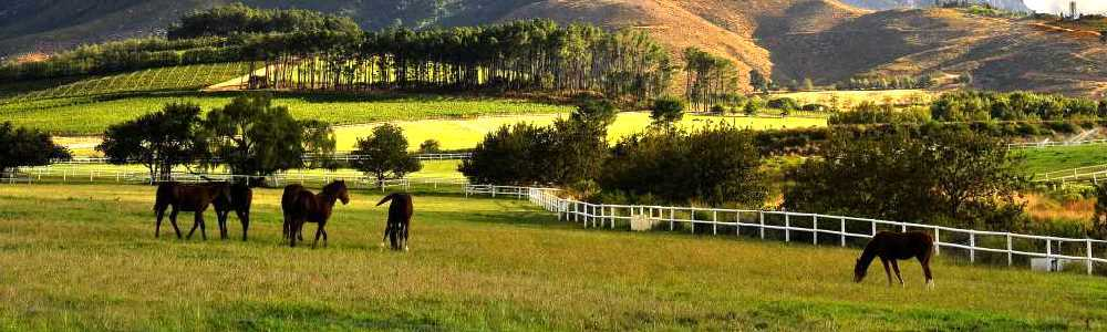 Cape Town and Winelands Hotels