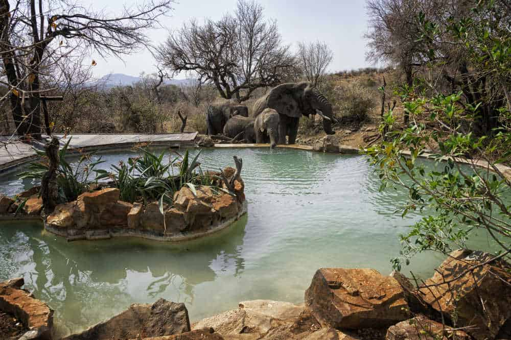 Impodimo Game Lodge | African Safaris with Taga