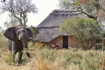 Kambaku Game Reserve | African Safari with Taga