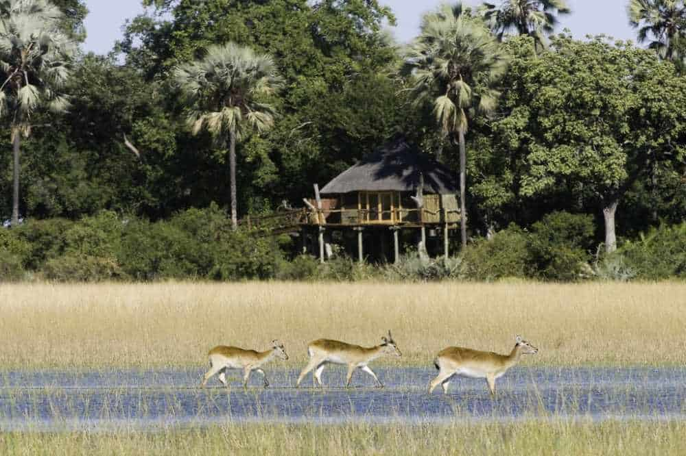 Kwetsani Camp | African Safaris with Taga