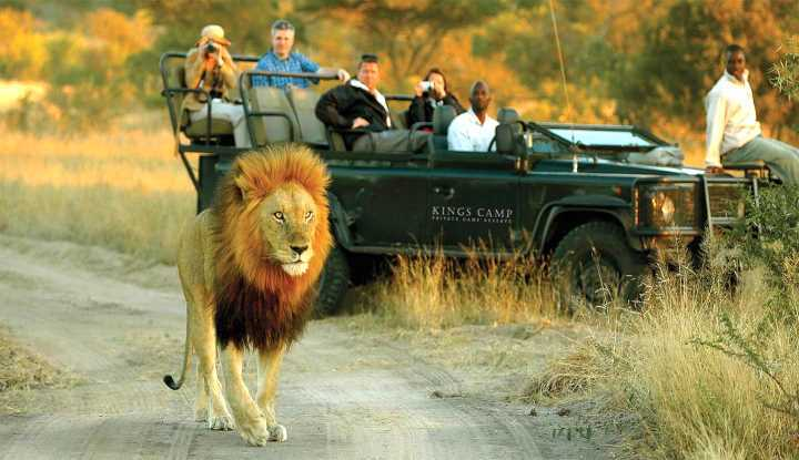Northern Kruger Private Safari | African Safari with Taga