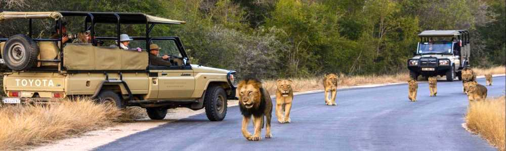 South Africa Lodges and Camps | African Safaris with Taga