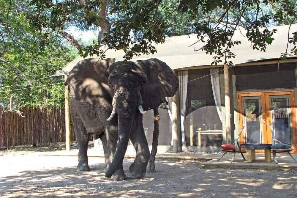 Safari Lodges and Camps in Zimbabwe