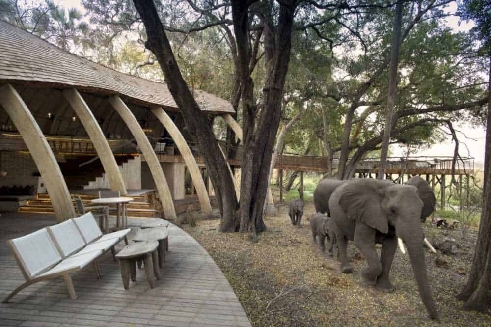 Sandibe Safari Lodge Guest Area