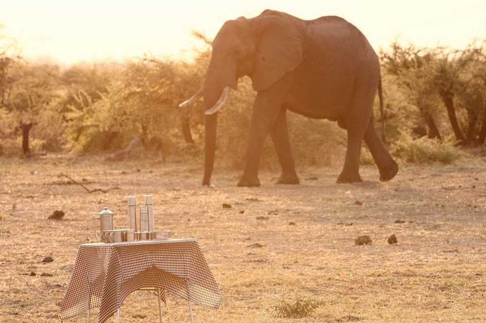 Savute under Canvas | African Safaris with Taga