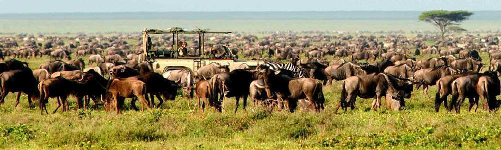 Tanzania Lodges and Camps