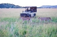 Tanzania Safaris   African Safaris with Taga