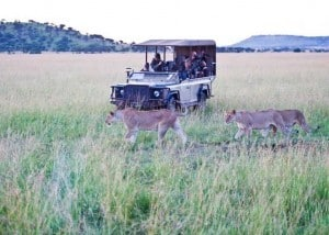 Singita Green Season Serengeti | African Safaris with Taga