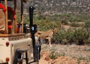 Fly me around Kenya | African Safaris with Taga