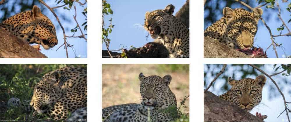 Special safari moments captured at Umlani this past month   African Safaris with Taga