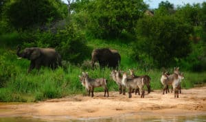 Heighten your senses with a Motswari walking safari | African Safari with Taga
