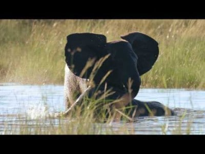 Wilderness Safaris Videos | African Safaris with Taga