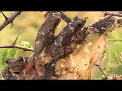 Mala Mala Videos   African Safaris with Taga