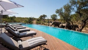 Africa's best pools with a view | African Safari with Taga
