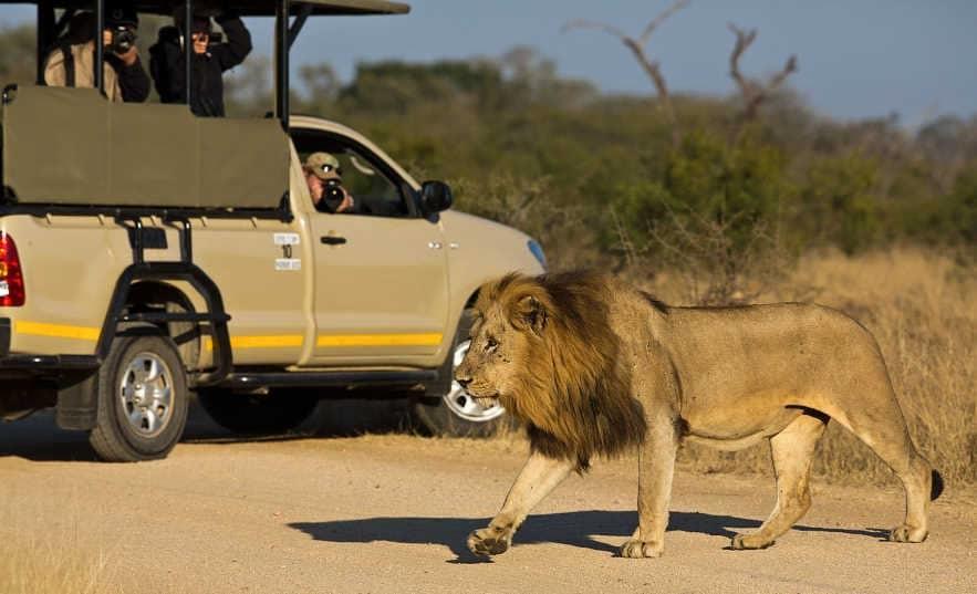 Budget Safaris in Africa