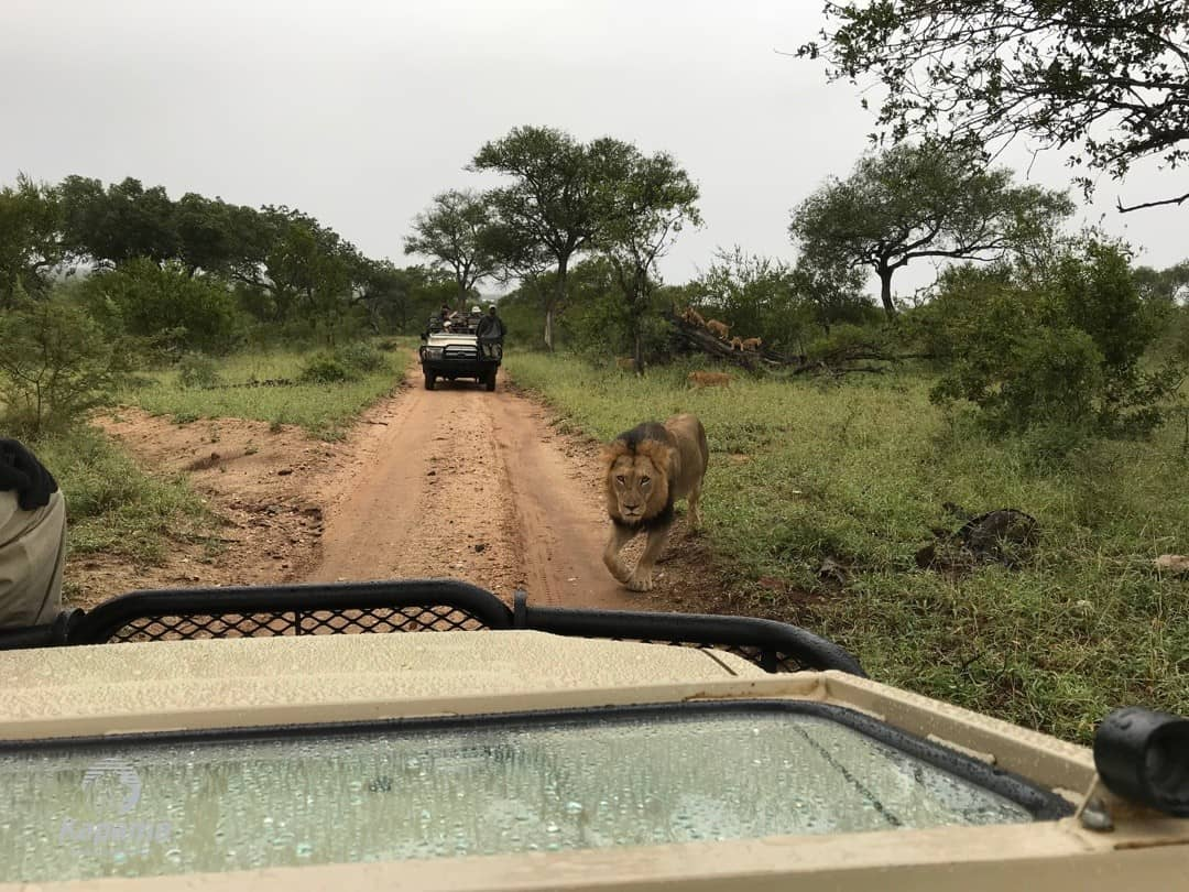Rainy Lions | African Safaris with Taga