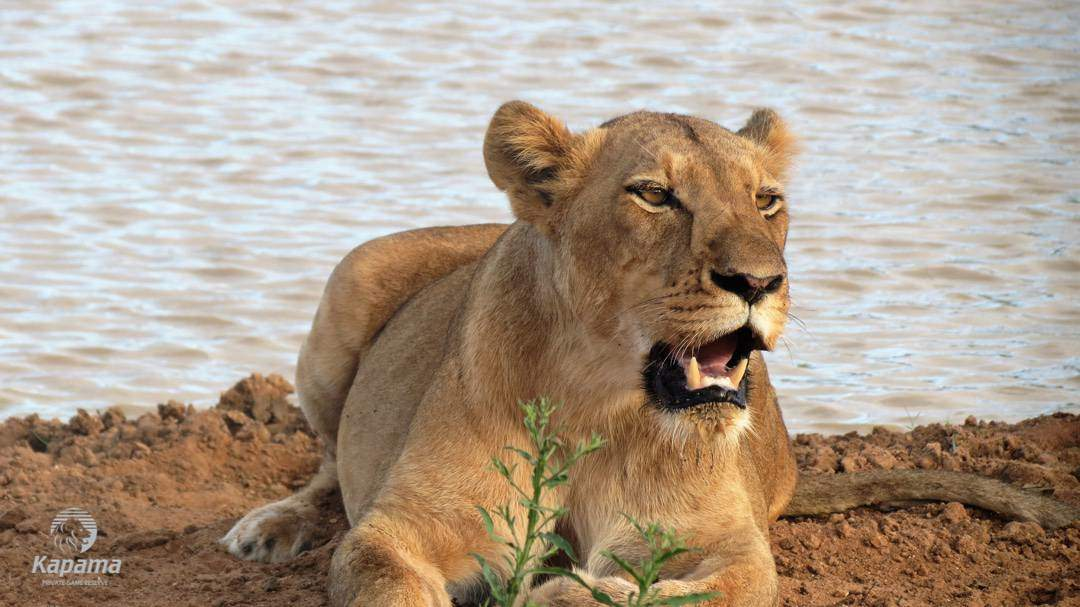 Prey and Predator | Taga Safaris