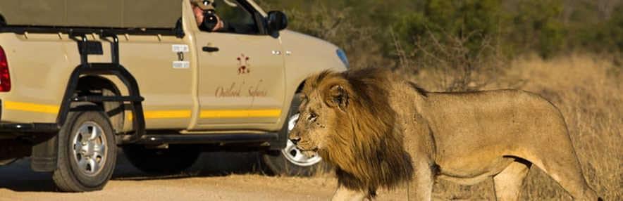 Kruger Park Safaris | African Safaris with Taga