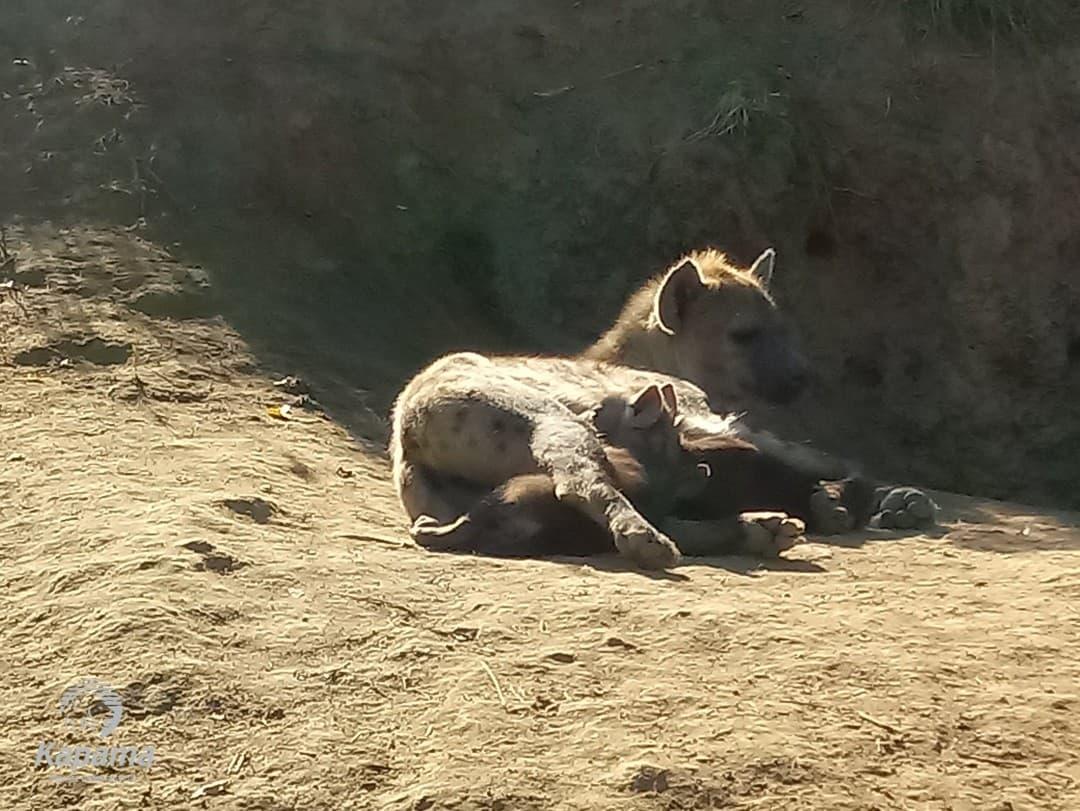 Bush Cleaning | Taga Safaris