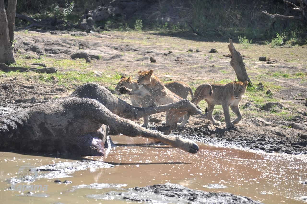 Murky Water | African Safaris with Taga