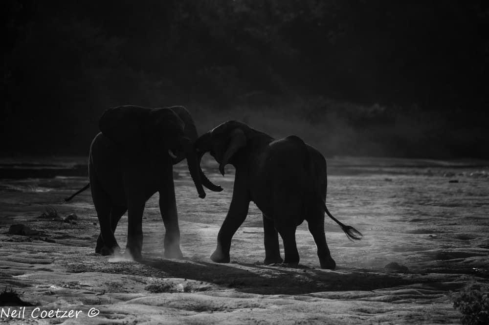 Kings Camp Rangers Report April 2018   African Safaris with Taga