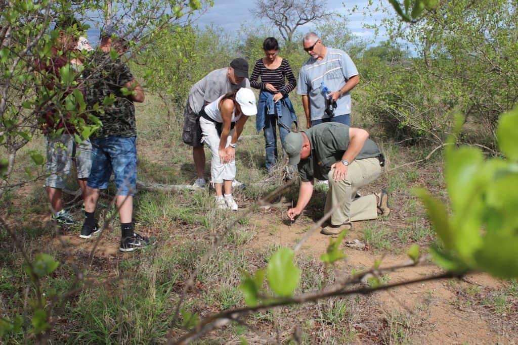 Family Friendly Safaris in the Timbavati   African Safari with Taga
