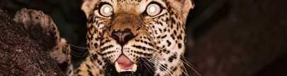 Safari Specials | African Safaris with Taga