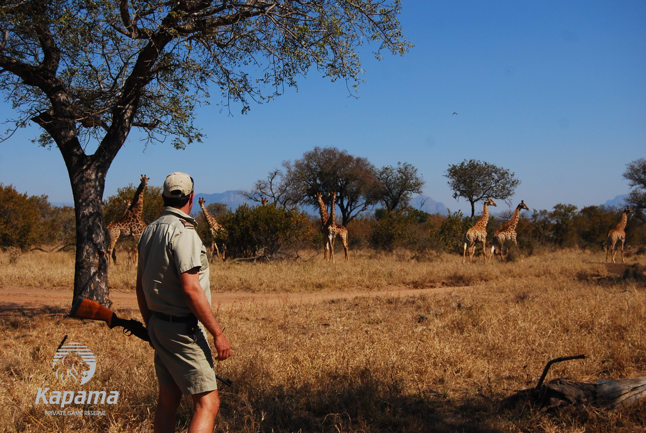 8 Reasons to take a Walk on the Wild Side | African Safari with Taga