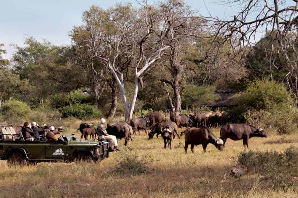Family Friendly Safaris in the Timbavati | African Safaris with Taga