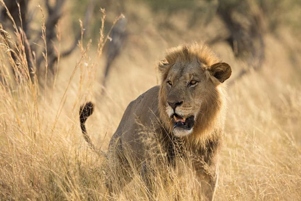 Vumbura Plains - March 2018 | African Safaris with Taga