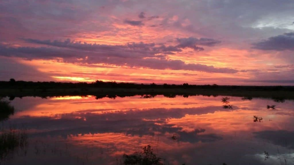 Phinda: the return of the rains | Taga Safaris