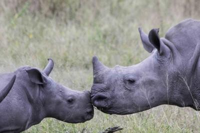 Sayonara Sudan | African Safaris with Taga