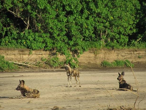 Ruckomechi Magic by Any Other Name | African Safaris with Taga