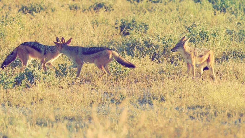 Kalahari Plains - April 2018 | African Safaris with Taga