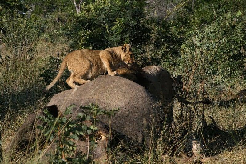 Davisons Camp - April 2018 | Taga Safaris