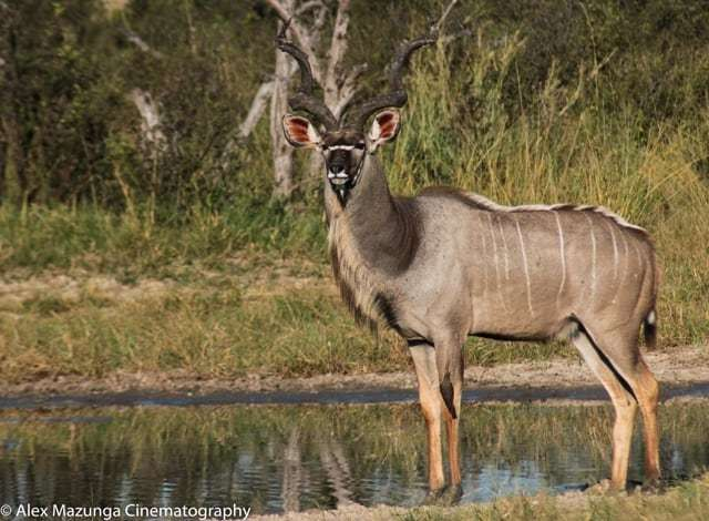Private Journey Guide Alex Mazunga on Safari May 2018 | African Safaris with Taga