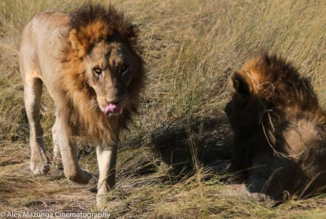 Private Journey Guide Alex Mazunga on Safari May 2018 | African Safari with Taga